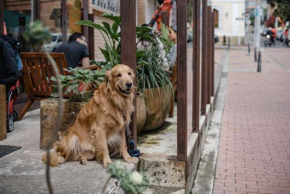 Dog-friendly restaurants are a common sight