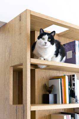Bookshelf by Play Arquitetura (with a feline finishing touch)