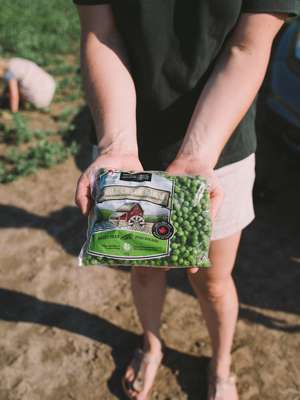 Mill Creek Farm peas are hand-picked