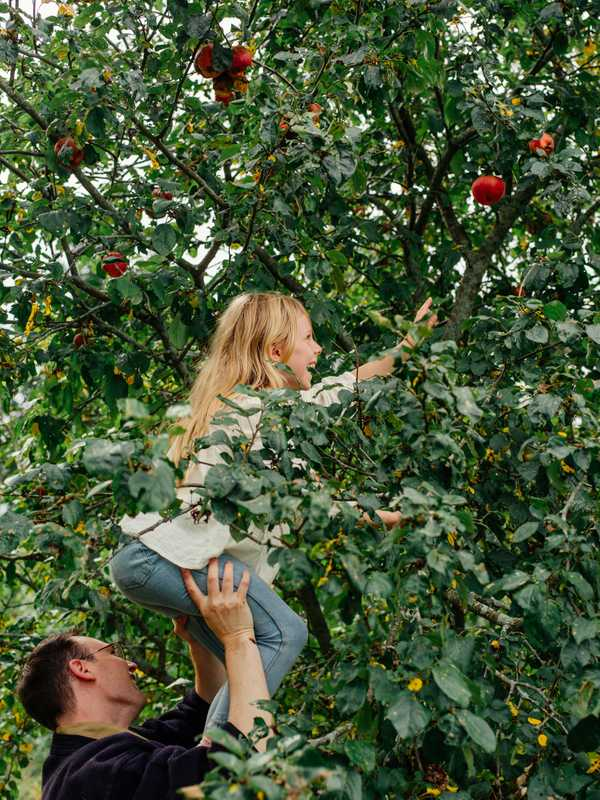 Heights of apple picking