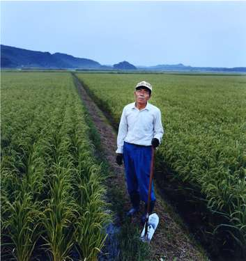 Rice farmer on Tanegashima