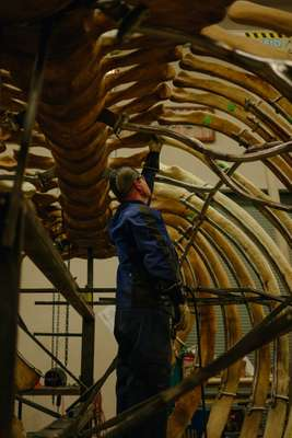 RCI's blacksmith Jamie Bain in the belly of a blue whale