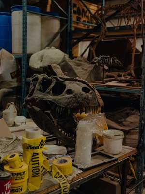 An Albertosaurus patiently awaits its makeover
