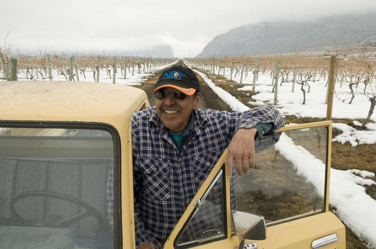 Vine pruner Steve Louie Lezard at the Nk'Mip Vineyard