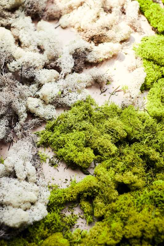 Moss for the Sion car's dashboard