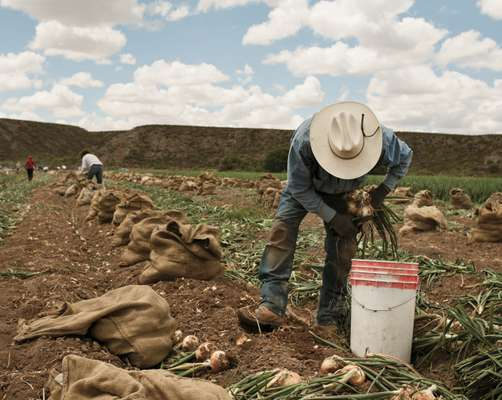 A Mexican farm worker in the US