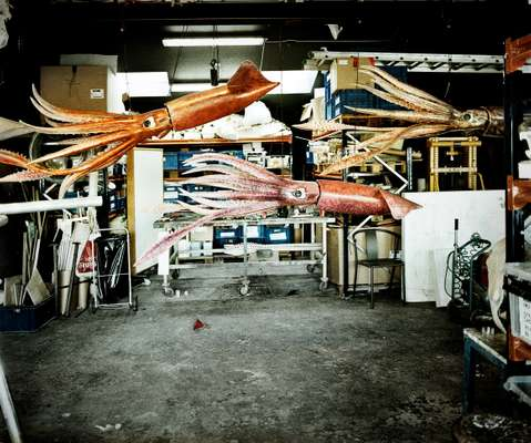 Models of giant squid for Denmark's Aquarium