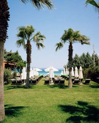 7800 Cesme's manicured lawns and well-tended palm trees