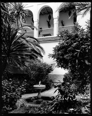 Inside the walls: a riad's palm and fruit garden