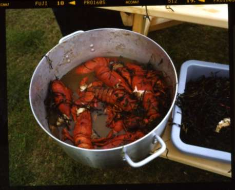 Steamed lobsters – a treat for the final party