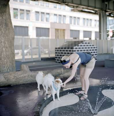 There's space for four-legged friends at a dog park along the East River