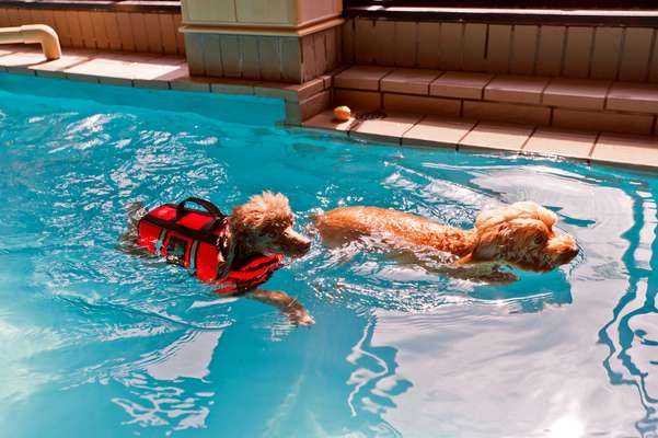 Dog therapy in a swimming pool