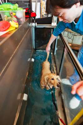 Water treadmill for dogs, good for rehab and slimming