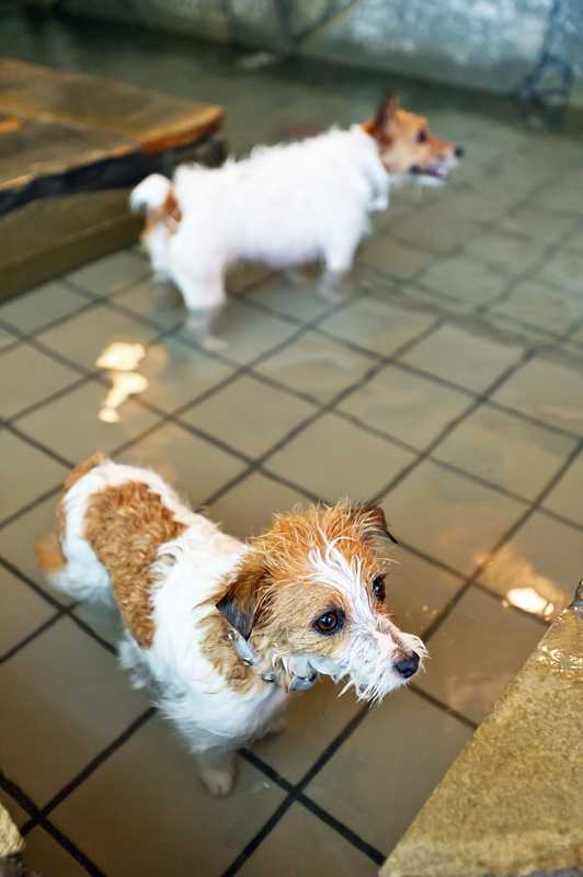 A dip in the hot spring at the dog onsen