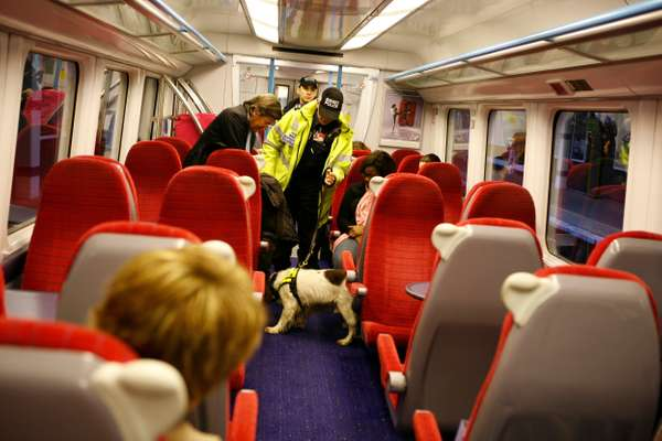 Oscar the spaniel searches a Gatwick Express train
