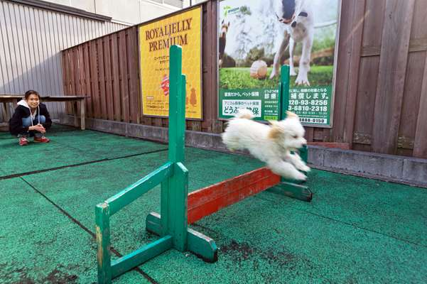A dog run at Tsunayoshi no Yu, which can be rented out by groups for up to 50 small dogs