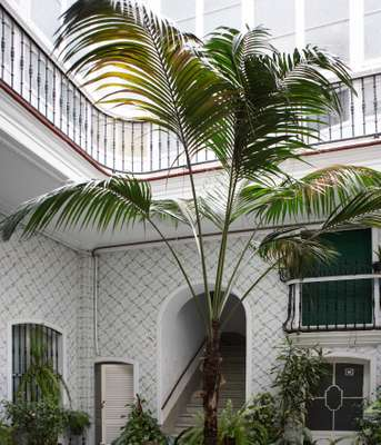 Courtyard of a house in Casco Antiguo