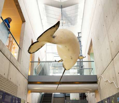 A narwhale hangs from the ceiling of the Institute of Natural Resources