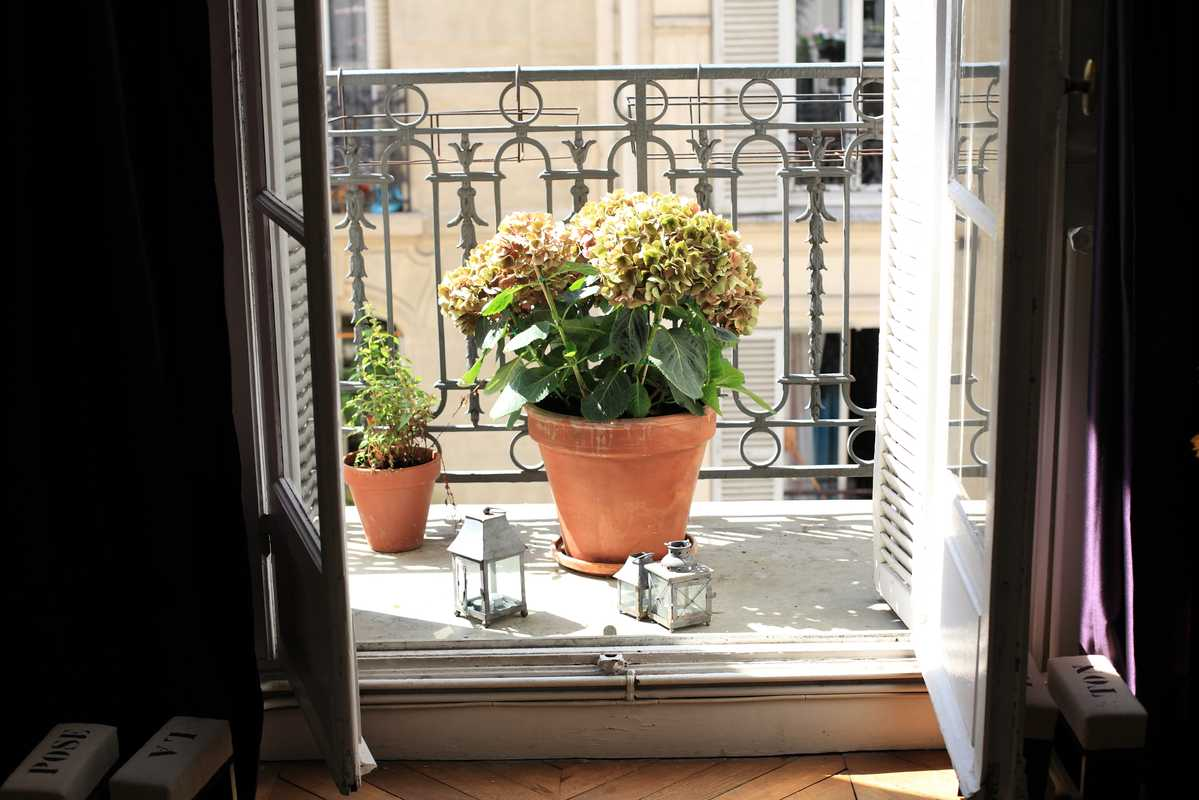 Plants on chef Christophe Pelé's apartment balcony