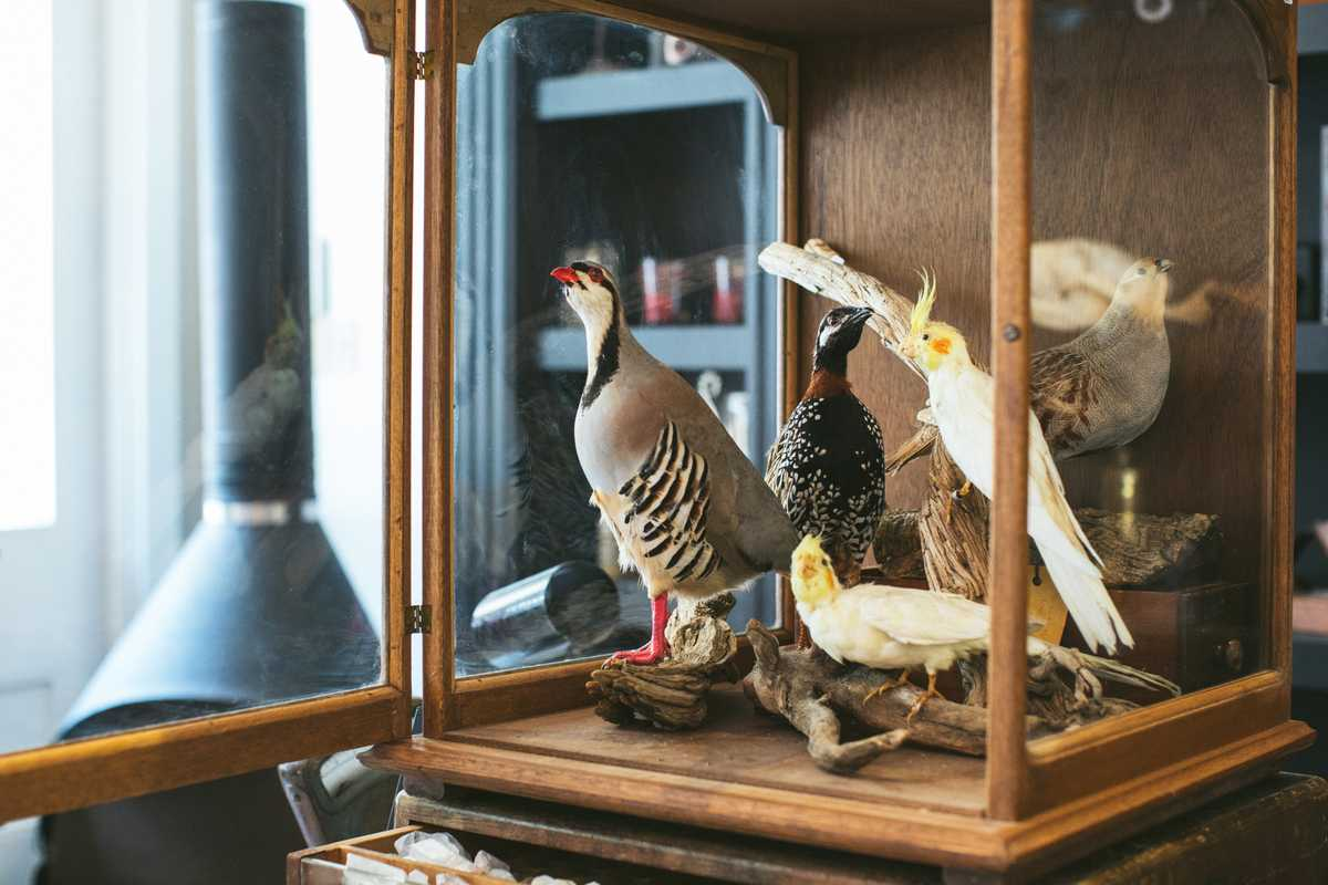Taxidermy enthusiasts flock here