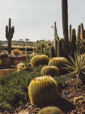 Succulents thrive in Spain's arid climate