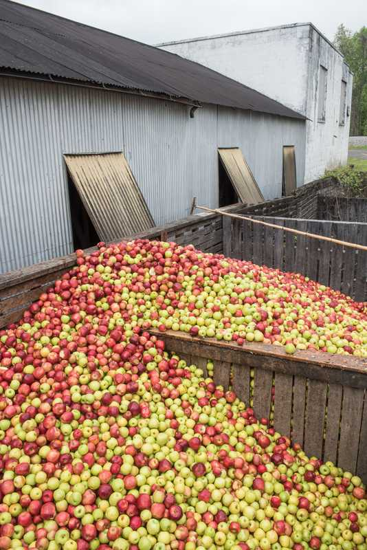 Apples outside the mill house