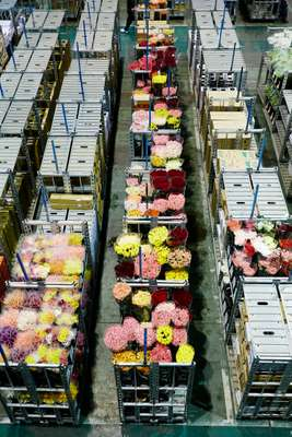 Flowers ready for auction