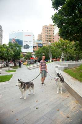 Huskies on Calligraphy Greenway