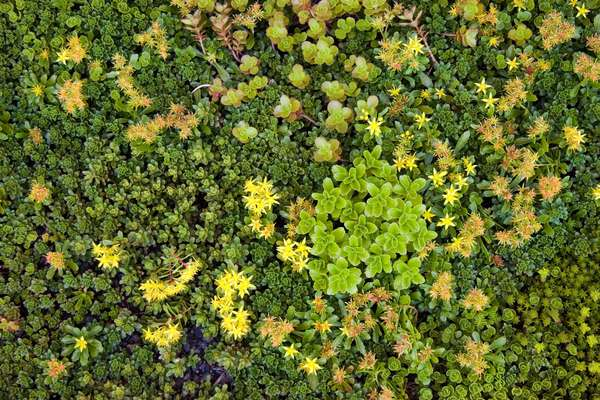 Close-up of drought-resistant plants on the residential Solaire building roof in Battery Park City, New York