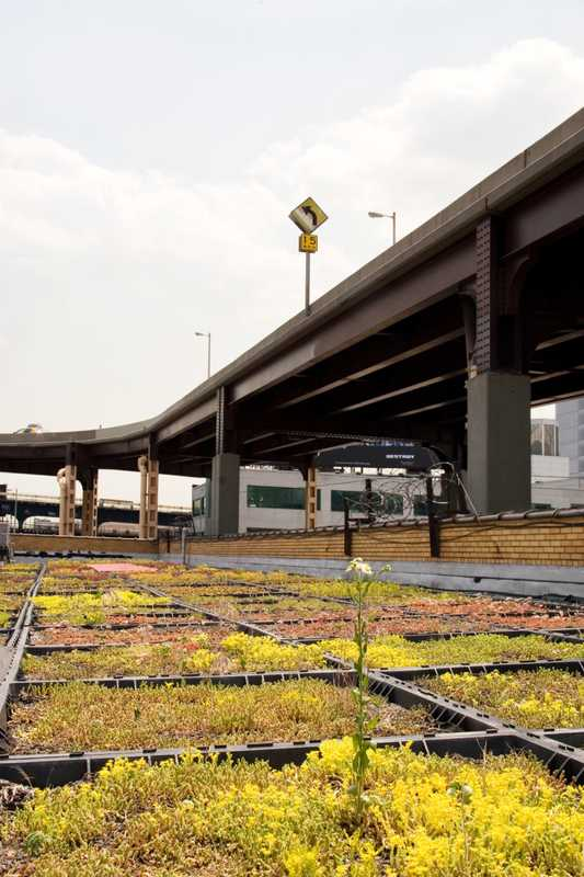 Roof of Silvercup TV Studios in Queens, New York planted with succulents