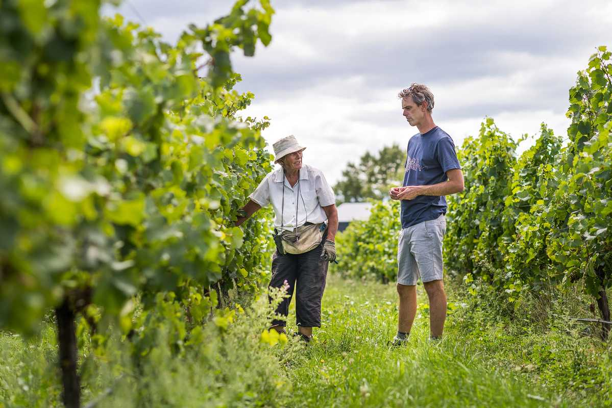 Dom Maxwell (right) in the vineyard