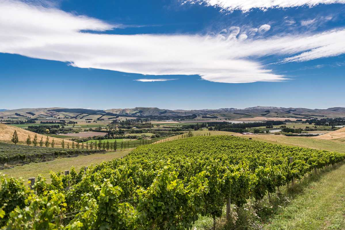 A third of Greystone's wines go to New Zealand's domestic market