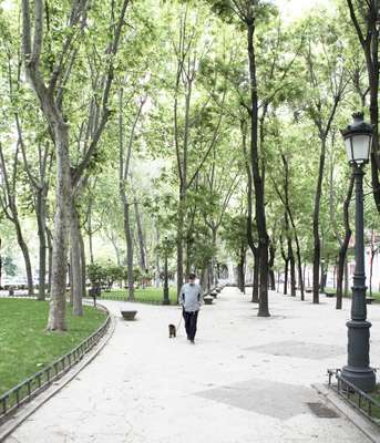 The Paseo del Prado