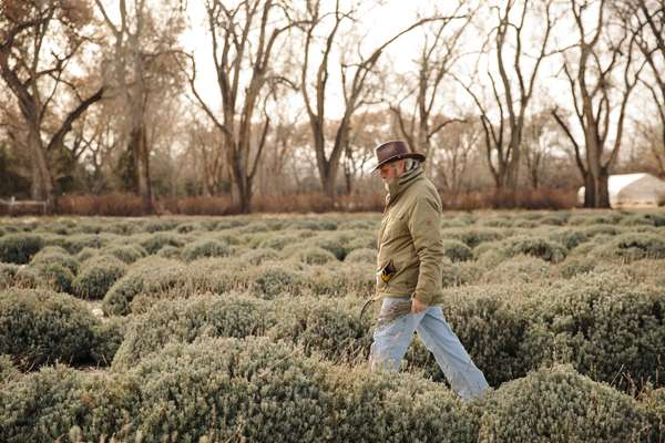Farmer Wes in the lavender fields