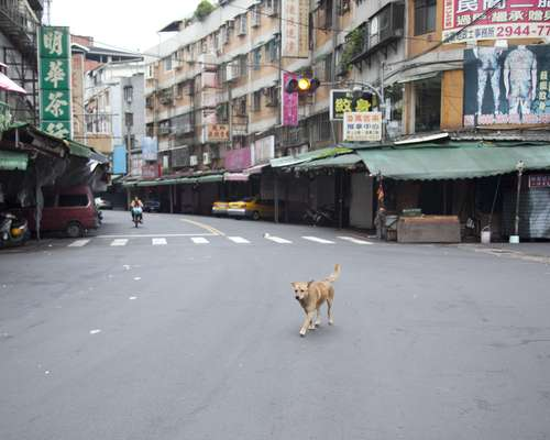 Animal control in Taipei