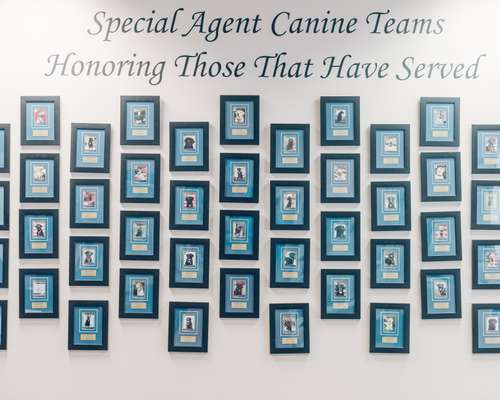 Canine wall of honour
