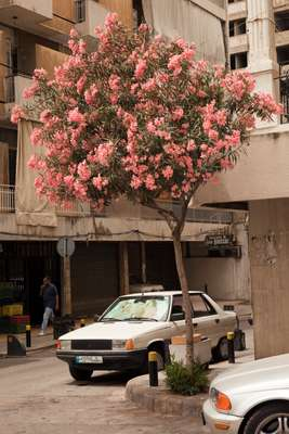 Street scene in Ashrafieh, near Sassine Square