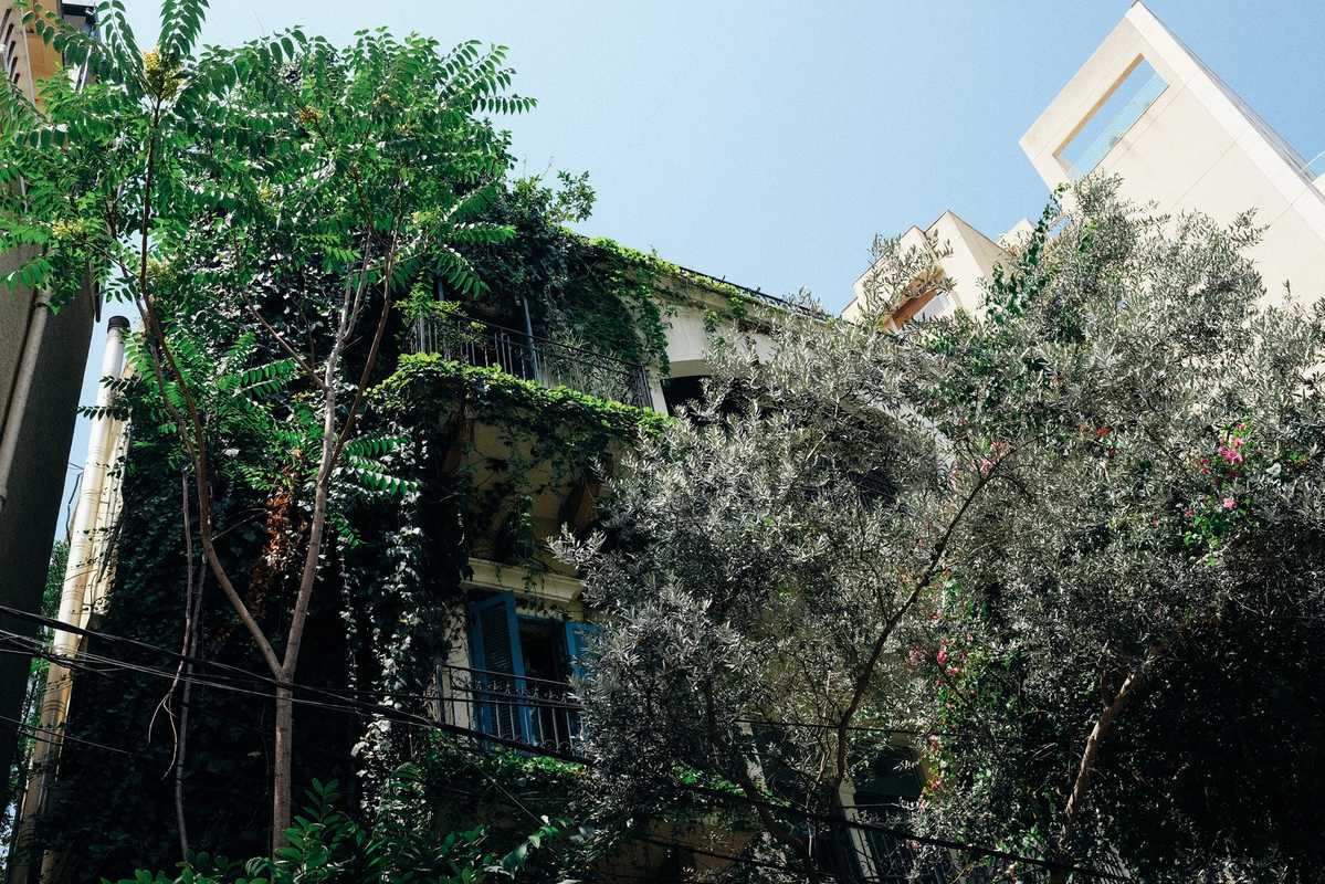 Planting keeps prying eyes away in the Ashrafieh district