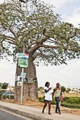 A baobab tree on the outskirts of Luanda