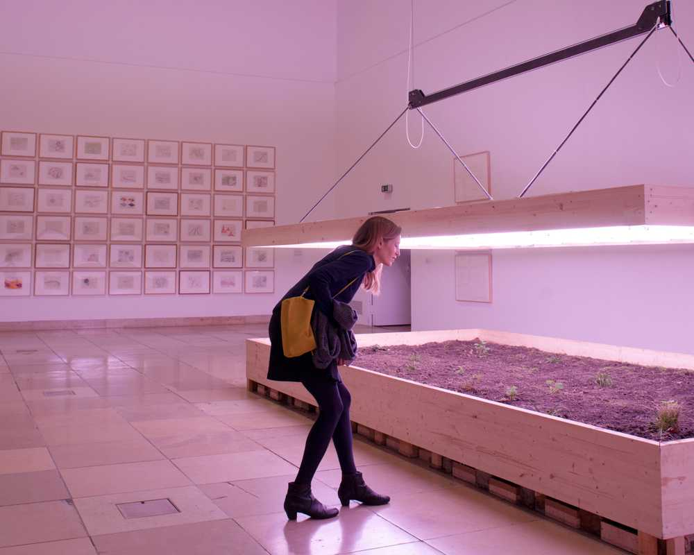 A visitor explores an exhibition on land art
