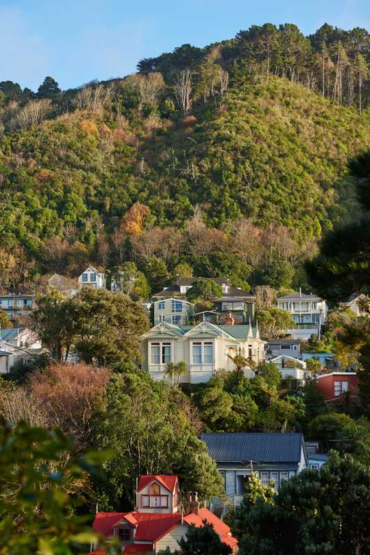Wellington houses are often built on hillsides