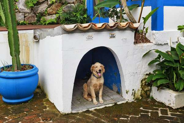 Four-legged resident: Disco in his very own mini house