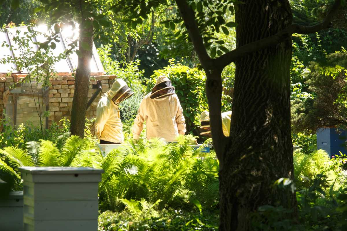 Urban beekeepers tend a hive