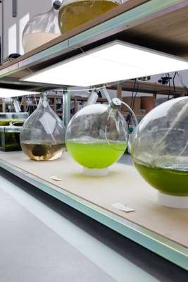 Algae project of Eric Klarenbeek and Maartje Dros
