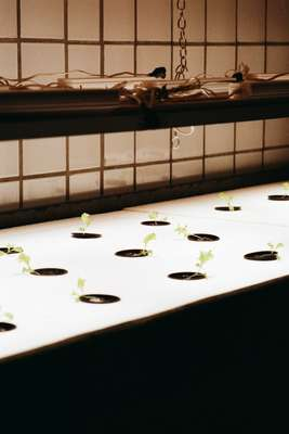 Growing greens in Space10's hydroponic farm