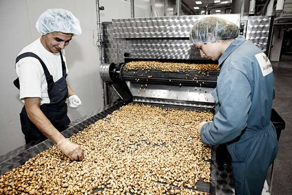 Workers pick out any nuts that don't come up to standard