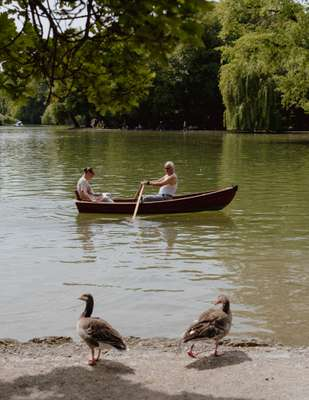 Geese judge water-bound humans