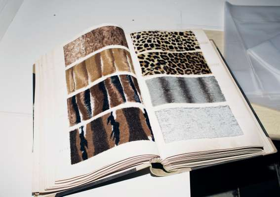 Knowledge of fur is what Steiff Schulte's business is based upon