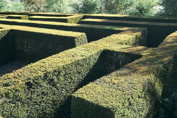Hedge-walled maze at Amstelpark