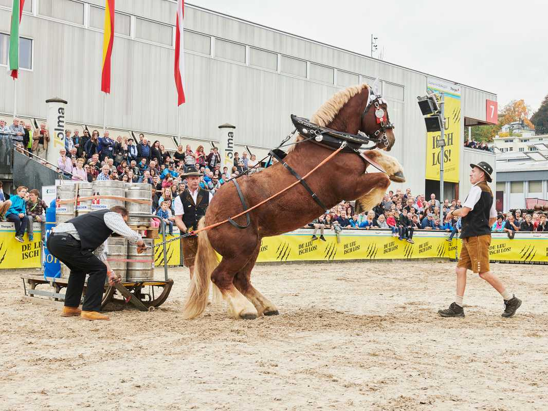 A test of strength: horse vs Schwingen champions